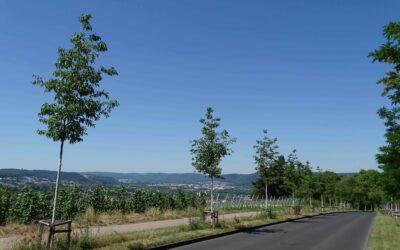 Stadt Trier – Petrisberg